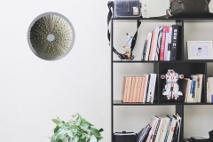 Urchin-Shelf-Situ
